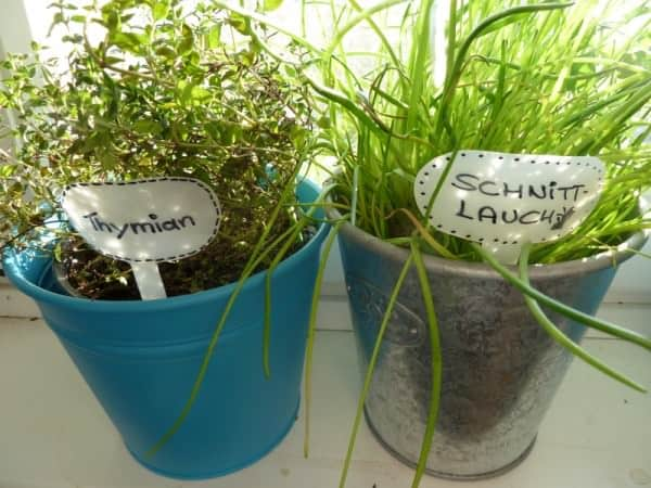 Plant Plugs Made of Shower Gel Bottle 1 • Do-It-Yourself Ideas