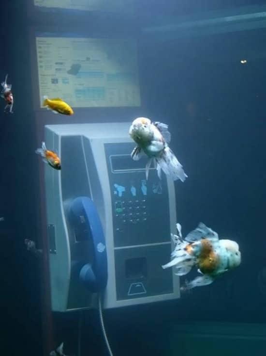 aquarium_phone_booth06