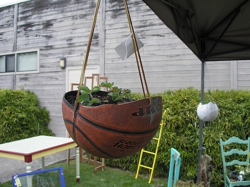 planted-basket-ball