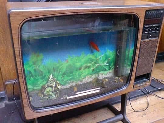 fish tv1