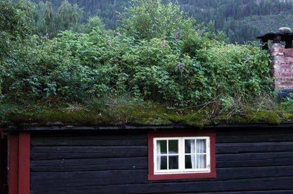 green-roof-norway (2)