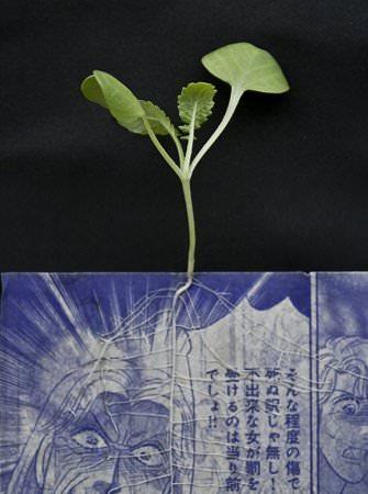 Manga Farming 3 • Recycled Art