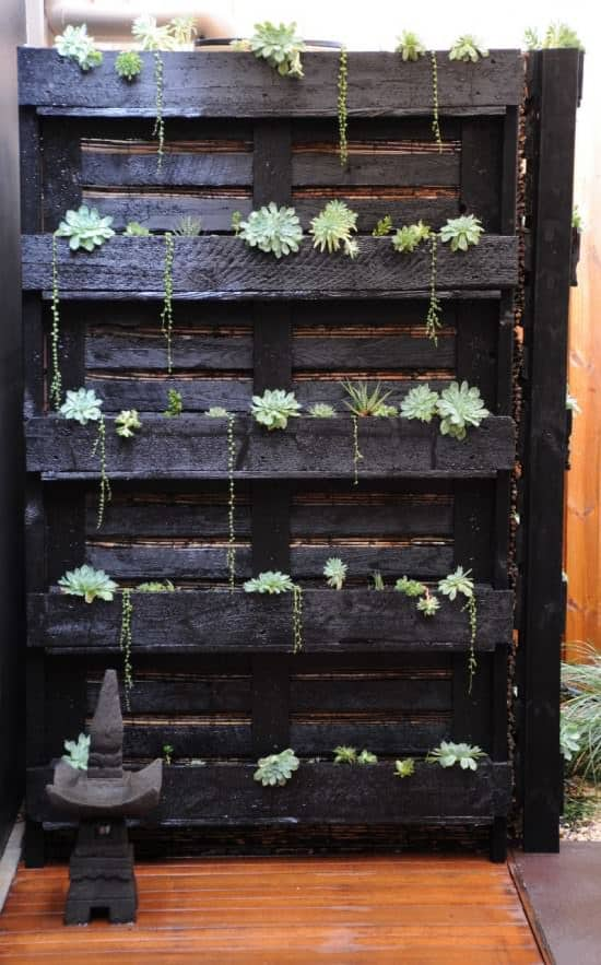 Paletto-cactus 1 • Do-It-Yourself Ideas