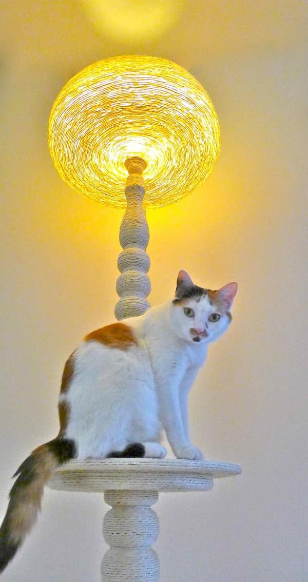 Lighting Cat Tree 1 • Lamps & Lights