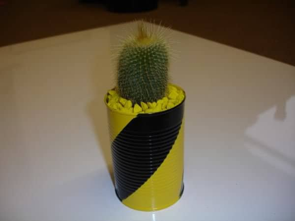 Cantus! The Cacti In Cans 2 • Accessories