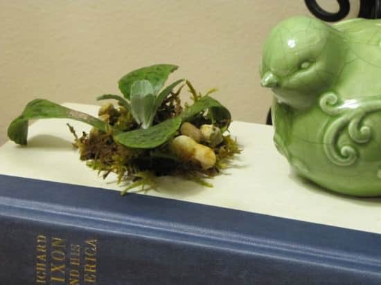 recycled-book-planter1