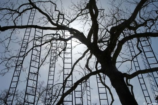 L'arbre Aux Echelles / Ladders Tree 2 • Garden Ideas