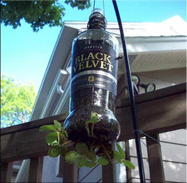 Black-Velvet-Plant-Holder