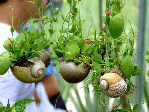 Diy: Snail Shell Into Mini Garden Planters 1 • Do-It-Yourself Ideas