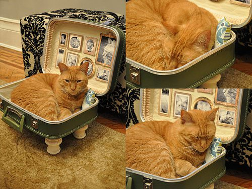 Cat Bed From Upcycled Suitcase 1 • Accessories