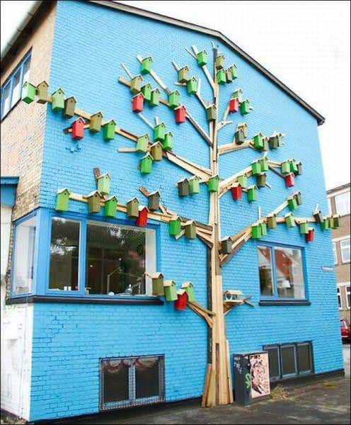 Tree to Hide a Drain Pipe 1 • Home Improvement