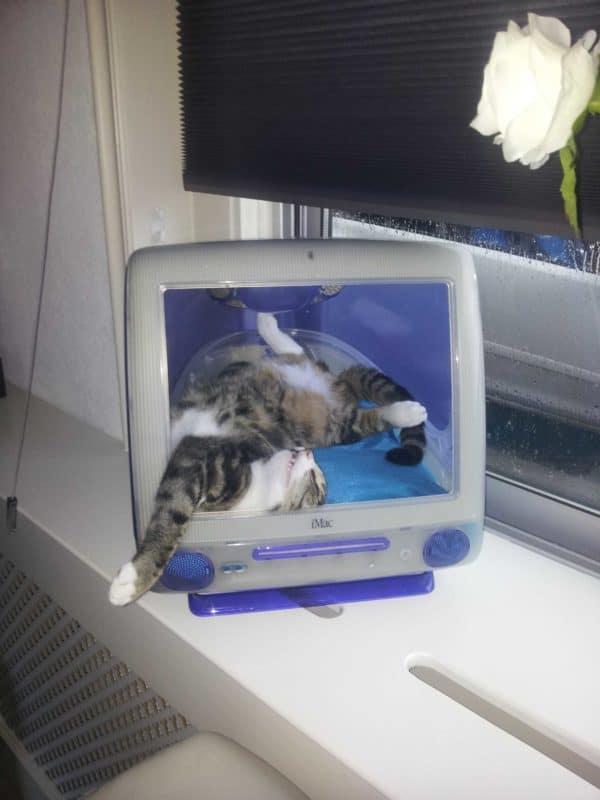 I-cat2