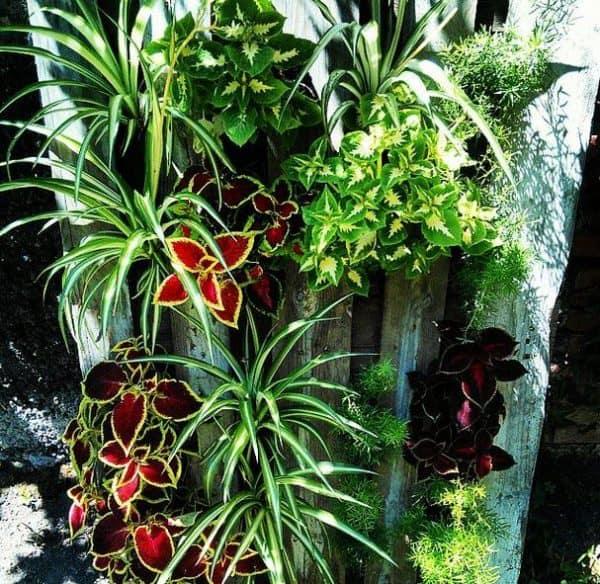 pallet-planters5