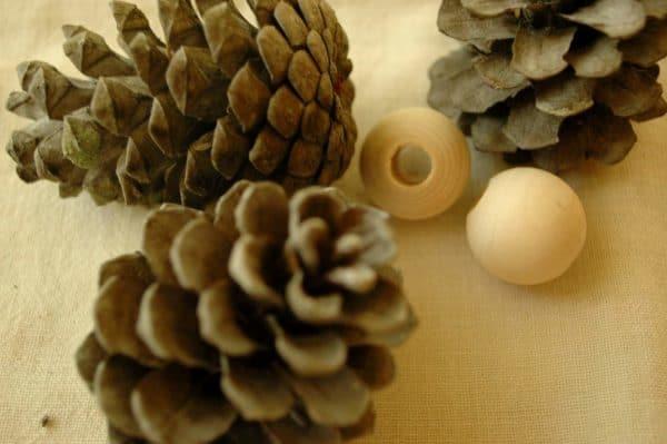pinecone5