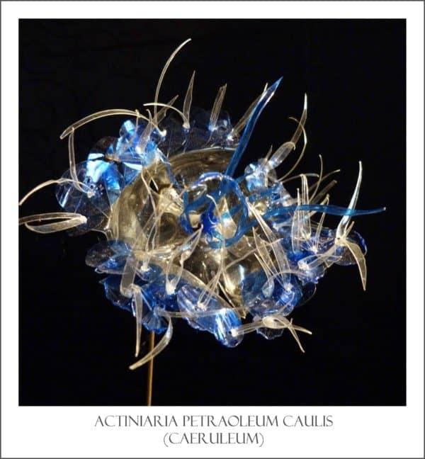 anemone-epineux-bleu