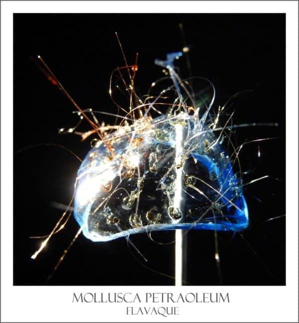 mollusquebicolor
