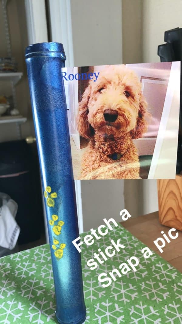 Fetch a Stick. Snap a Pic. 3 • Do-It-Yourself Ideas
