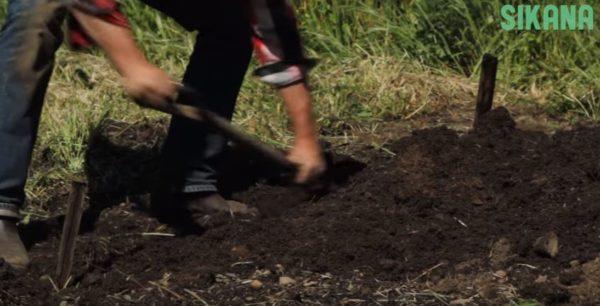 Biointensive Soil Prep mixing in the amendments into the soil.