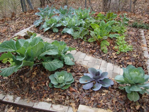 Put Those Autumn Leaves to Good Use in Your Garden 9 • Garden Ideas