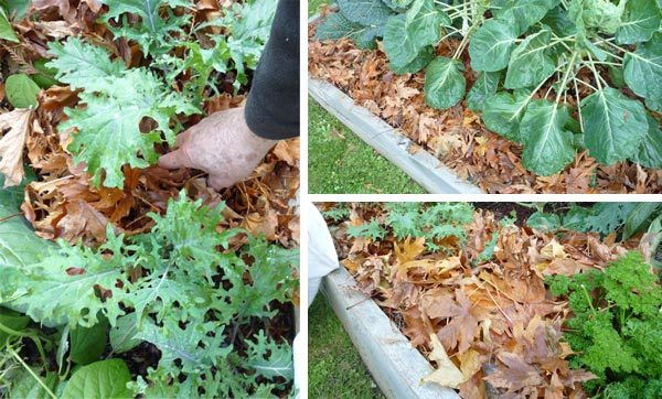 Put Those Autumn Leaves to Good Use in Your Garden 3 • Garden Ideas
