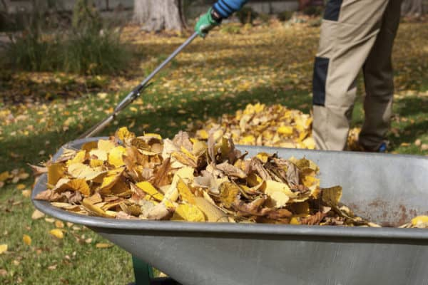 Put Those Autumn Leaves to Good Use in Your Garden 1 • Garden Ideas