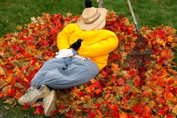 Put Those Autumn Leaves to Good Use in Your Garden 7 • Garden Ideas