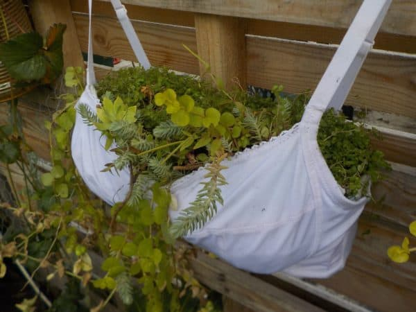 Upcycled Bra Planter will show your support in more than one way.