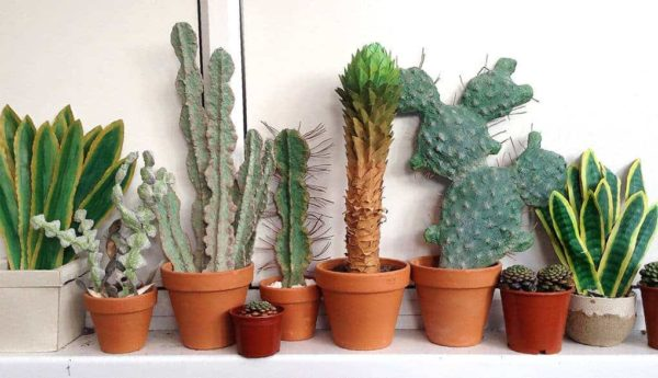 Cardboard Cactuses For Your Home Decor 1 • Recycled Cardboard