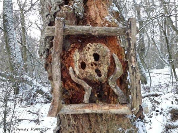 The Reincarnation of Driftwood by Tamas Kanya 11 • Wood & Organic
