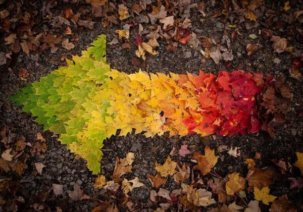 My picture for 10/10/10.  I love our autumn, full of colors.  Thanks to vanou and johanne for collecting the maple leafs.
