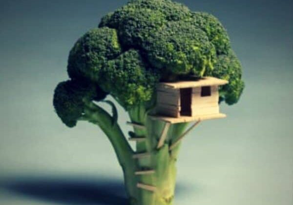 recyclart.org-broccoli-house-01