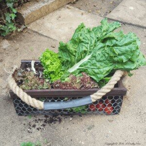 recyclart.org-easy-diy-harvesting-basket
