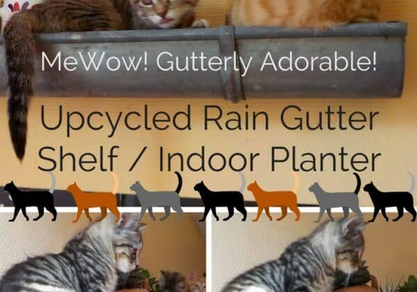 recyclart.org-upcycled-rain-gutter-shelf-stores-kitties-chats-de-gouttieres-02