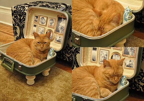 upcycled-cat-bed-suitcase1